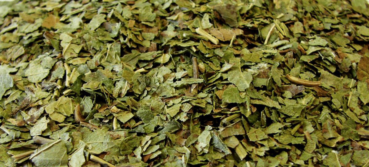 Как правильно собрать и засушить мяту и мелиссу для чая?