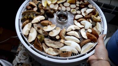 Можно ли сушить сыроежки на зиму: сезонные грибы круглый год