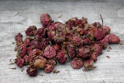 Полезно и вкусно: как правильно сушить землянику